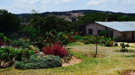 The climate in the Eastern Highlands is perfect for gardening