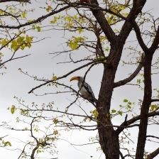 Bird sighting! @ Nata Bird Sanctuary