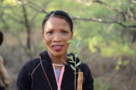 This is an example of an edible plant the bushmen eat -- it was slightly bitter, which we were told is a testament of the plant's medicinal properties