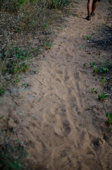 Animal and human tracks