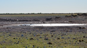 Animals can always be found congregating at one of the many waterholes in Etosha during the dry season