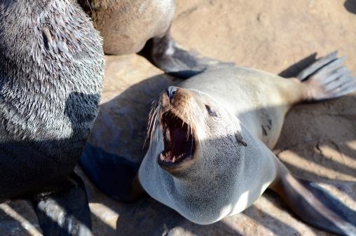 Hello seal!