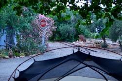 Camping at Calitzdorp Station