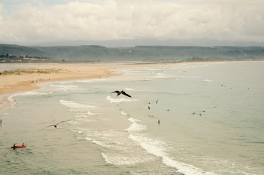Surf's up @Plettenberg Bay