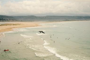 Surf's up @Plettenberg Bay