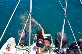 Chumming the water to attract the sharks - it can take 20min-2 hours before they come to investigate