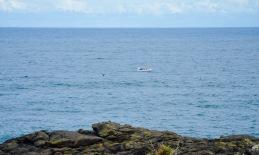 Whale ahoy!