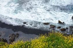 Pebble beach @ Yaquina Head